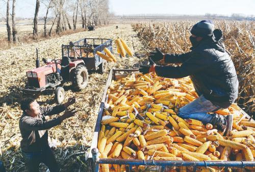 做好秋收工作 全面冲刺四季度 推动现代农业发展